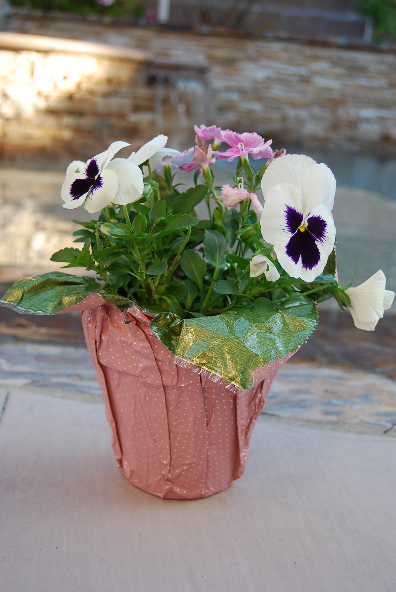 flower_pot.JPG