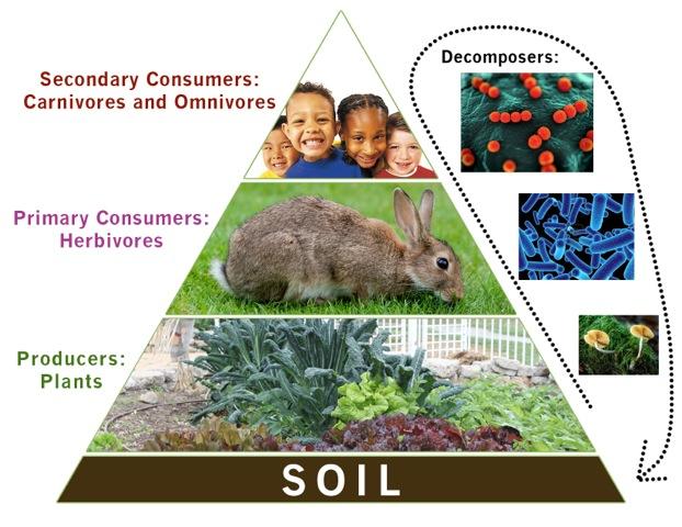 garden-energy-pyramid.jpeg