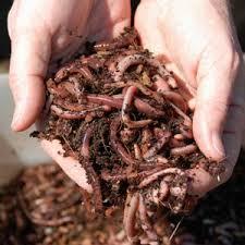 worm%20composting.jpg